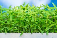 Close-up weinig groene bladeren in helder zonlicht Royalty-vrije Stock Foto's