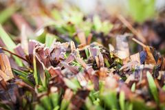Close up of cut grass stock image