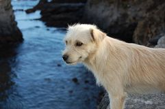 Close-up of Wet Dog by Lake Stock Photography