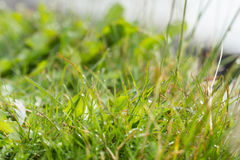 Close-up of a wet grass Stock Photos