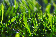 Close up of wet grass in morning light. Bokeh lights in wet gras. S.Rain Stock Photography