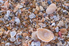 Close up of wet sand with crushed sea shells in sunny day. Stock Photo
