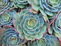 Succulent Details Stock Image