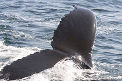 Close up of a whale royalty free stock photo