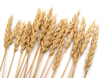 Close up of wheat Royalty Free Stock Photo