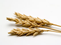 Close up of wheat Royalty Free Stock Photos