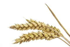 Close-Up of Wheat Royalty Free Stock Photography