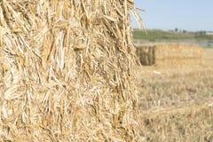 Close up wheat bale Stock Photography