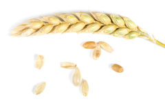 Close up wheat cereal crops Royalty Free Stock Images
