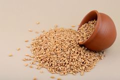 Wheat grains in clay pot. Close up of Wheat grains in clay pot Royalty Free Stock Images