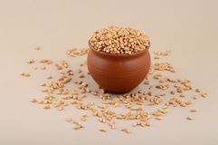 Wheat grains in clay pot. Close up of Wheat grains in clay pot Stock Photos