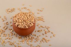 Wheat grains in clay pot. Close up of Wheat grains in clay pot Stock Image