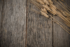 Close Up of Wheat Royalty Free Stock Images