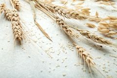 Close-up, wheat spike on white background, space for text stock photo