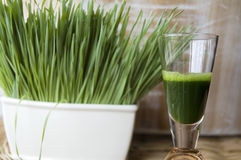 Close up wheatgrass juice shot. Close up wheatgrass juice in shot with wheatgrass background Stock Images