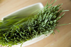 Close up wheatgrass in pot. Close up top of wheatgrass in white pot Royalty Free Stock Photos