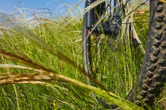 Close-up of the wheel of mountain bicycle in the green grass in the meadow in the countryside. stock images