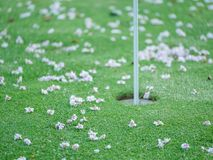 Close-up on blossoms on putting green. Blurry concept. Series stock image