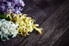 Close up of white and blue hyacinth flowers background copy spac Stock Photography