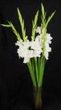 Close-up of white  carnationon  flowers Stock Image