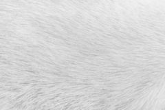 White cat fur texture for background , Natural animal patterns skin. Close up White cat fur texture for background , Natural animal patterns skin stock image