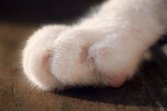 Close Up White Cat's Paw. A very close up image of a clean, soft white cat's paw contrasted against the grain of a wooden bench royalty free stock photos