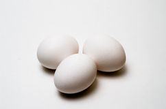 Close up white chicken eggs isolated background. Stock Photography
