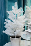 Close up white christmas tree blue background Stock Photography