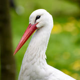 Close up of a white crane Stock Images