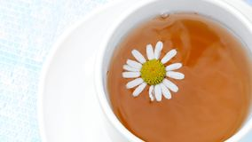 A close-up, a white cup with tea, a daisy flower floating on top of it.  stock video footage