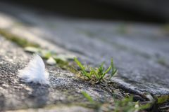 A white downy feather. A Close-up of a white downy feather on plaster stock images