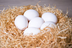 Close up of white eggs in nest Royalty Free Stock Photo