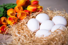 Close up of white eggs in nest and tulips Royalty Free Stock Image