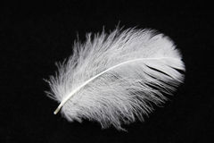 Close-up of a white feather. On a black background Royalty Free Stock Photo