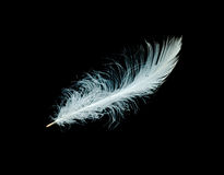 Close up of white feather Royalty Free Stock Photo