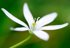 Close up of a white flower Stock Image
