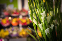 Close-up of white flower. At flower shop Stock Images