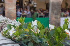 Close up white flowers with blurred people in the background. Treviso, Italy Royalty Free Stock Photography