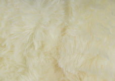 Close up of white fur Royalty Free Stock Photo