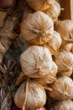 Braid of garlic heads stock image