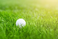 Close-up of white golf ball in green grass meadow. Details of play field.  Resort with sport outdoor activities concept. Close-up of white golf ball in green Royalty Free Stock Image