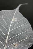 Close-up of a white leaf. White leaf shot with macro lens Stock Photography