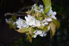 Close Up White Leaf Royalty Free Stock Image