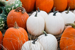 Close up of white and orange pumpkins Royalty Free Stock Images