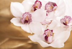 Close-up of white orchids flowers Stock Image