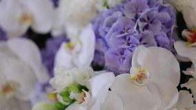 Close-up of white orchids on light background. stock footage