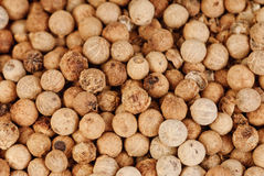 Close up white pepper  as background Stock Images