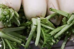 Radish. The close-up of white radish Stock Photography