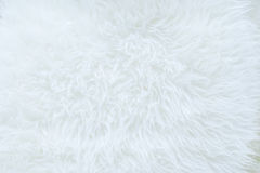 Close up of white real sheep skin texture background,Ready for product display montage. Stock Image