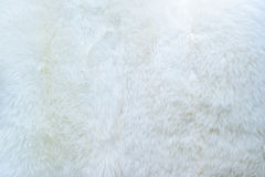 Close up of white real sheep skin texture background,Ready for product display montage. Stock Photography